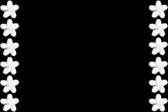 Fiore su fondo nero Fotografia Stock Libera da Diritti