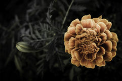 Fiore su progettazione nera del fiore Fotografia Stock