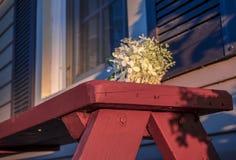 Fiore su un banco di legno Immagini Stock