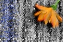Fiore su un fondo grigio, illustrazione di Autumn Orange Immagini Stock Libere da Diritti