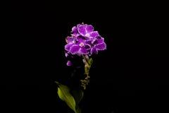 Fiore su un fondo nero fotografie stock