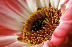 Fiore su una tavola di estate Fotografia Stock