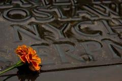 Fiore su una tomba Fotografia Stock Libera da Diritti