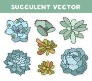 Fiore succulente su fondo bianco, illustrazione disegnata a mano di vettore, progettazione piana dell'agave Illustrazione di Stock