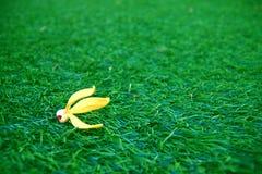 Fiore sui campi di erba Fotografia Stock Libera da Diritti