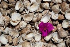 Fiore sui cockleshells Immagine Stock