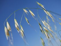 Fiore sul cielo blu Fotografia Stock