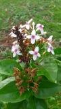Fiore sul giardinaggio Fotografia Stock Libera da Diritti