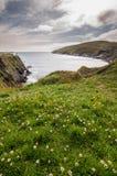 Fiore sul mare Fotografia Stock Libera da Diritti