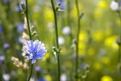 Fiore sul prato Immagine Stock