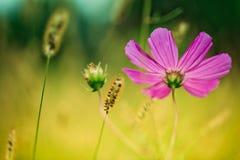 Fiore sul prato di estate fotografia stock