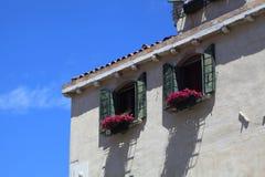 Fiore sulla finestra fotografia stock libera da diritti