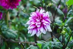 Fiore sulla foglia verde del fondo verde fotografie stock