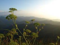 Fiore sulla montagna Immagine Stock