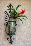 Fiore sulla parete Immagine Stock