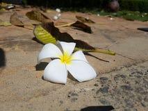 Fiore sulla strada Fotografia Stock Libera da Diritti
