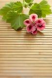 Fiore sulla tabella Fotografia Stock