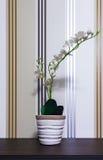 Fiore sulla tabella Fotografia Stock Libera da Diritti
