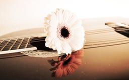 Fiore sulle corde, primo piano Fotografia Stock