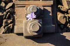 Fiore sulle rotaie Fotografia Stock