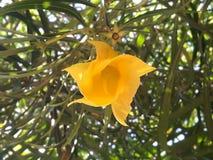 fiore Sun-giallo immagine stock