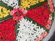 Fiore tailandese di Colorfull Fotografia Stock Libera da Diritti
