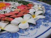 Fiore tailandese di Colorfull, fine su Immagine Stock Libera da Diritti