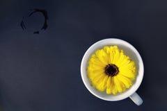 Fiore in tazza Fotografia Stock