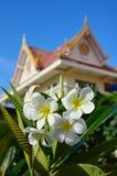 Fiore in tempiale Fotografia Stock Libera da Diritti