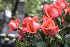 Fiore in tomba cattolica fotografie stock libere da diritti