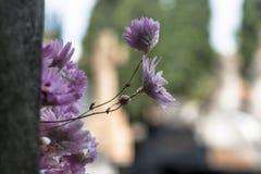 Fiore in tomba cattolica fotografia stock