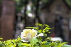 Fiore in tomba cattolica fotografia stock libera da diritti