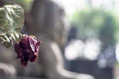 Fiore in tomba cattolica immagine stock libera da diritti