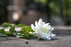Fiore in tomba cattolica immagini stock