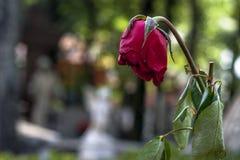 Fiore in tomba cattolica fotografie stock