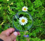 Fiore tramite una lente d'ingrandimento Fotografia Stock