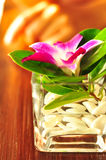Fiore tropicale Immagine Stock Libera da Diritti
