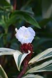 Fiore tropicale Fotografia Stock Libera da Diritti