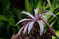 Fiore tropicale Fotografie Stock