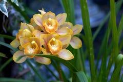 Fiore tropicale al giardino rinomato di Fredrick Meijer Fotografia Stock Libera da Diritti
