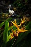 Fiore tropicale arancio con l'uccello nei precedenti fotografie stock