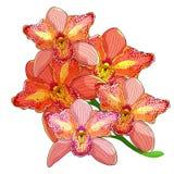 Fiore tropicale del Cymbidium rosa dell'orchidea Illustrazione di vettore illustrazione vettoriale