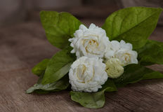 Fiore tropicale del gelsomino su legno Fiori e foglie del gelsomino su Br fotografia stock