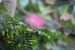 Fiore tropicale delicato Fotografia Stock Libera da Diritti