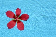 Fiore tropicale rosso che galleggia in acqua Fotografia Stock
