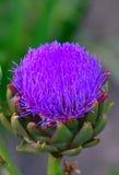 Fiore tropicale viola Fotografie Stock