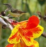 Fiore & uccello fotografia stock