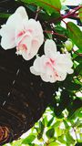 Fiore in un canestro d'attaccatura fotografia stock