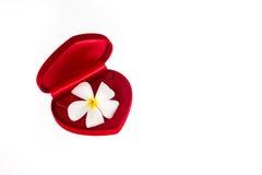 Fiore in un contenitore rosso di velluto Fotografia Stock