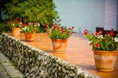 Fiore in un vaso Fotografia Stock Libera da Diritti